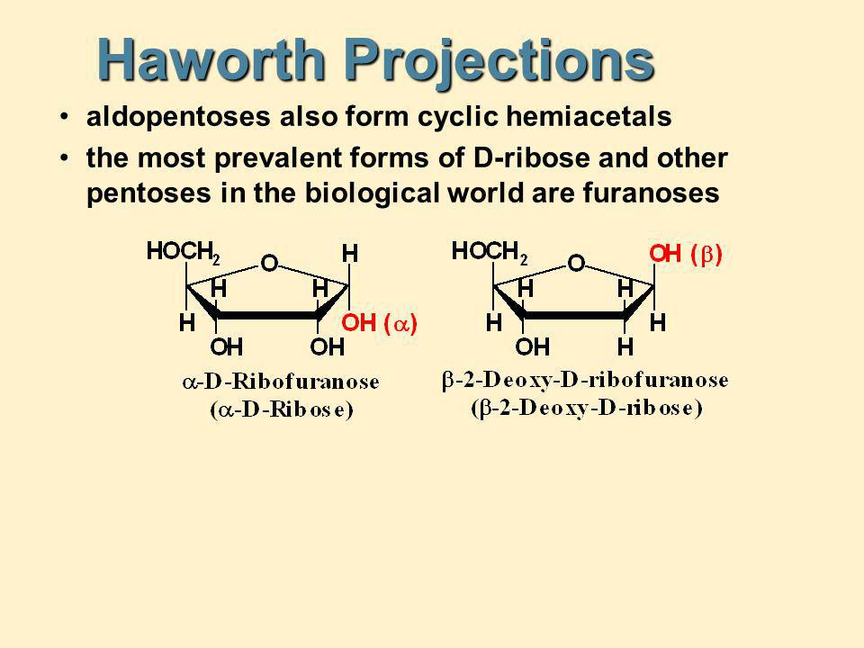 Haworth Projections aldopentoses also form cyclic hemiacetals the most prevalent forms of D-ribose and other pentoses in the biological world are fura
