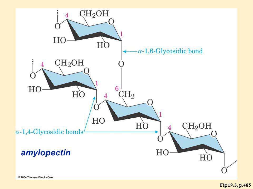 Fig 19.3, p.485 amylopectin