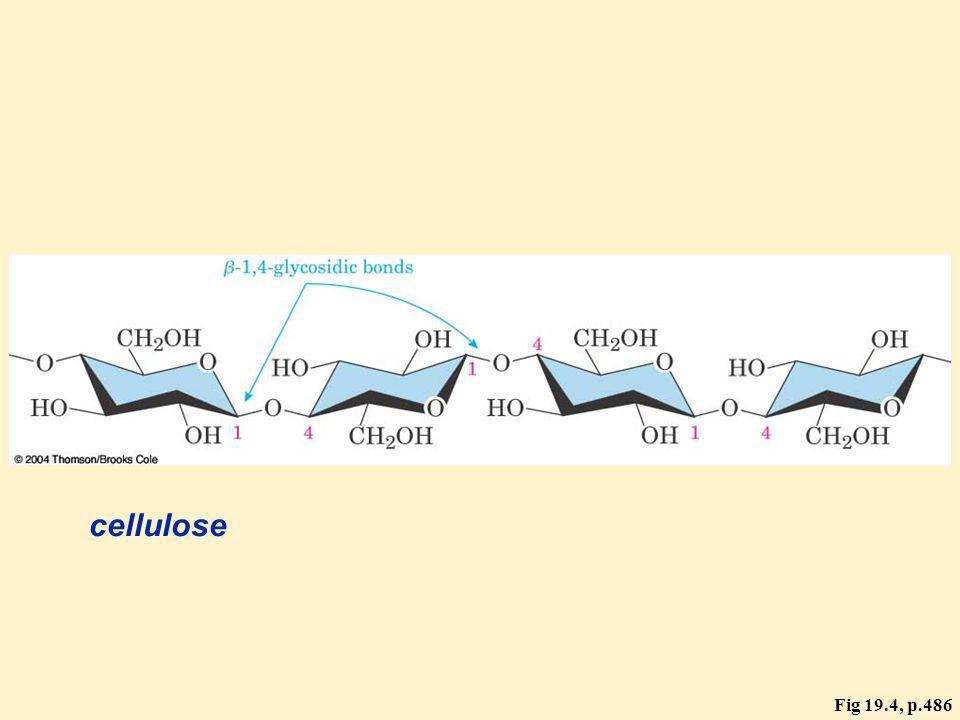 Fig 19.4, p.486 cellulose
