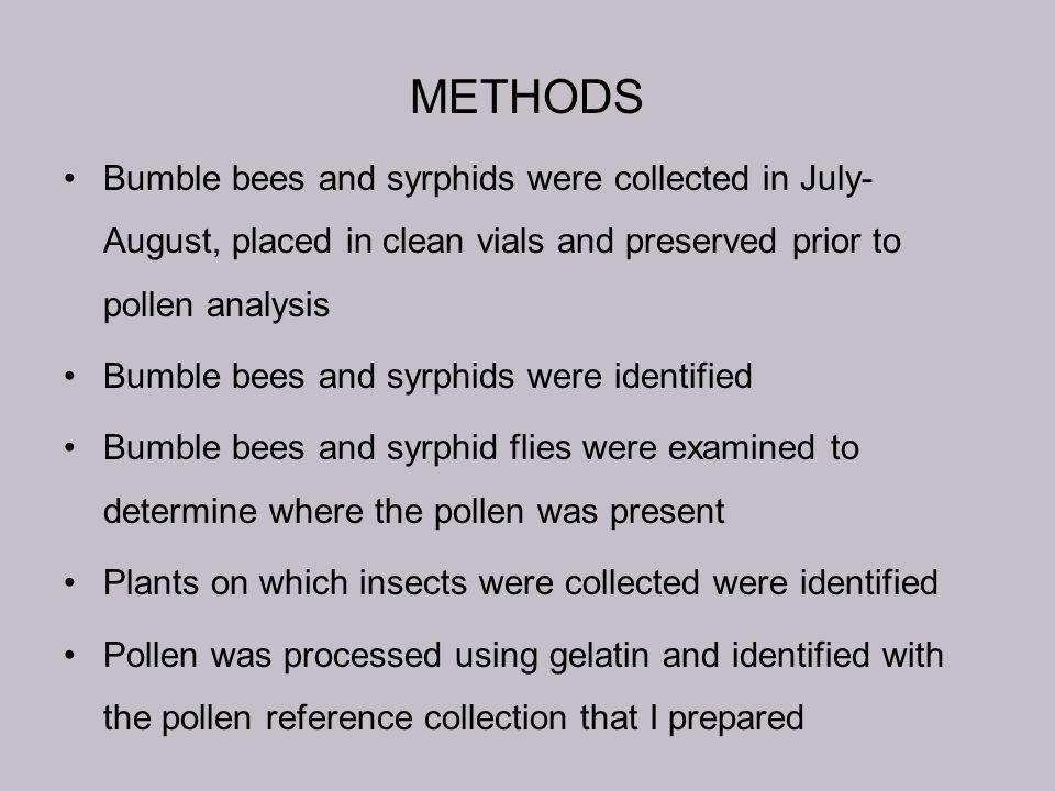 METHODS Bumble bees and syrphids were collected in July- August, placed in clean vials and preserved prior to pollen analysis Bumble bees and syrphids were identified Bumble bees and syrphid flies were examined to determine where the pollen was present Plants on which insects were collected were identified Pollen was processed using gelatin and identified with the pollen reference collection that I prepared