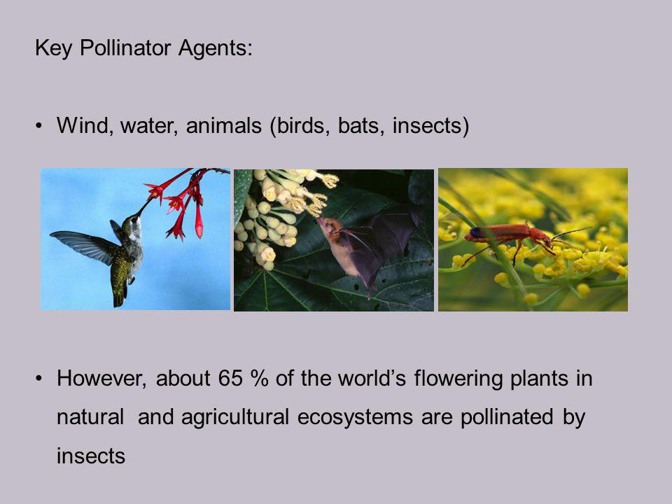 Key Pollinator Agents: Wind, water, animals (birds, bats, insects) However, about 65 % of the world's flowering plants in natural and agricultural ecosystems are pollinated by insects