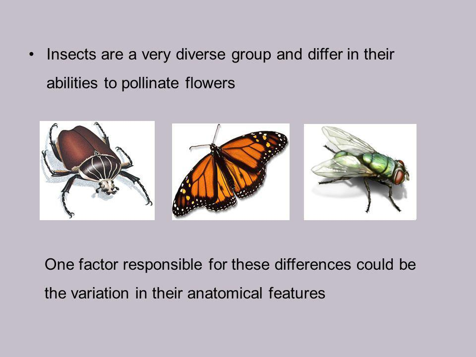 Insects are a very diverse group and differ in their abilities to pollinate flowers One factor responsible for these differences could be the variation in their anatomical features