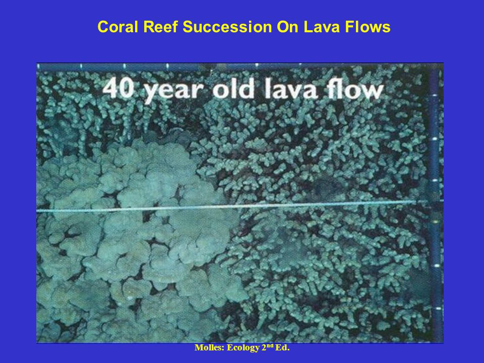 Molles: Ecology 2 nd Ed. Coral Reef Succession On Lava Flows