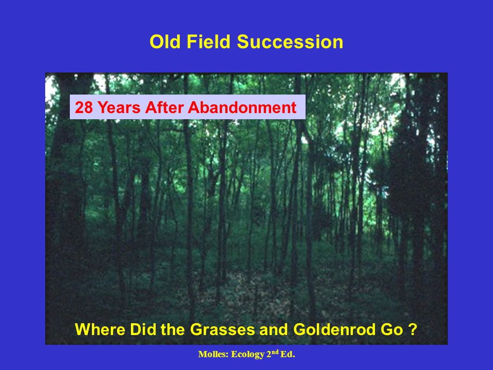 Molles: Ecology 2 nd Ed. Old Field Succession 28 Years After Abandonment Where Did the Grasses and Goldenrod Go ?