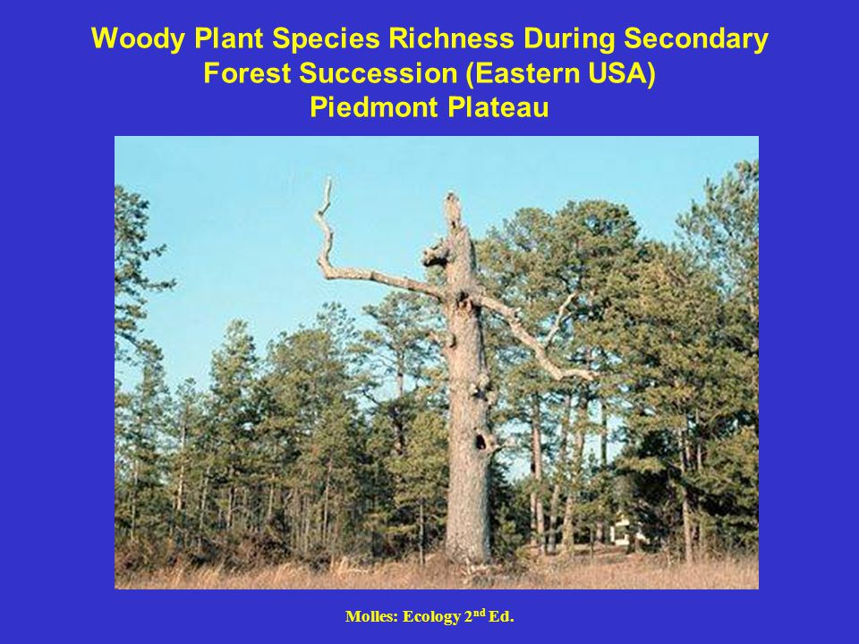 Molles: Ecology 2 nd Ed. Woody Plant Species Richness During Secondary Forest Succession (Eastern USA) Piedmont Plateau