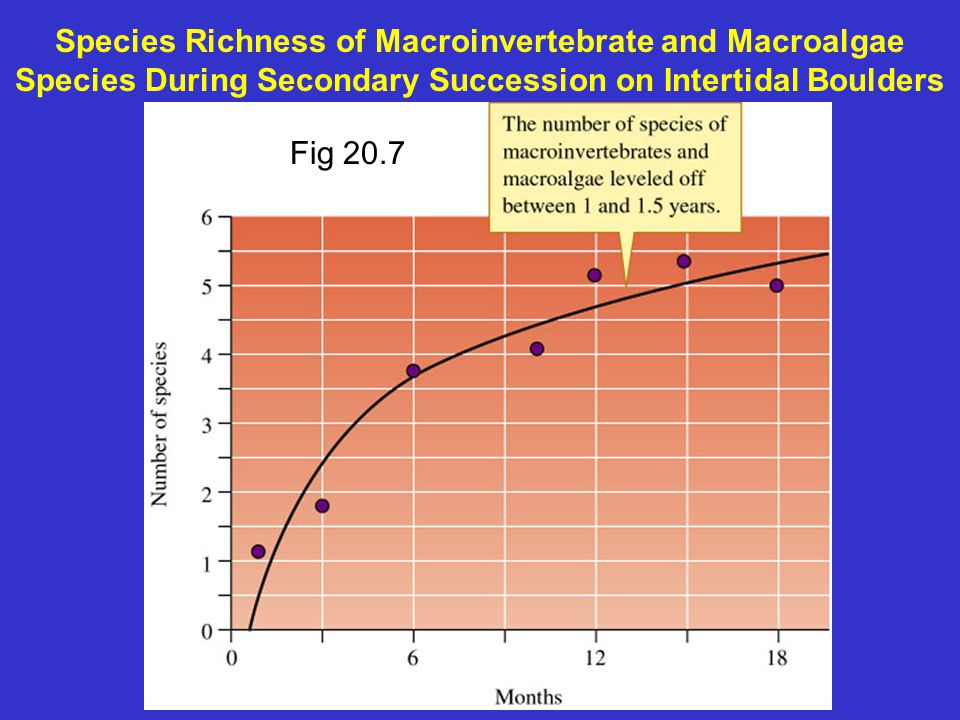 Species Richness of Macroinvertebrate and Macroalgae Species During Secondary Succession on Intertidal Boulders Fig 20.7