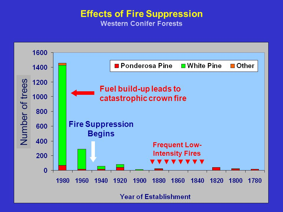 Effects of Fire Suppression Western Conifer Forests Frequent Low- Intensity Fires ▼▼▼▼▼▼▼▼ Fire Suppression Begins Fuel build-up leads to catastrophic