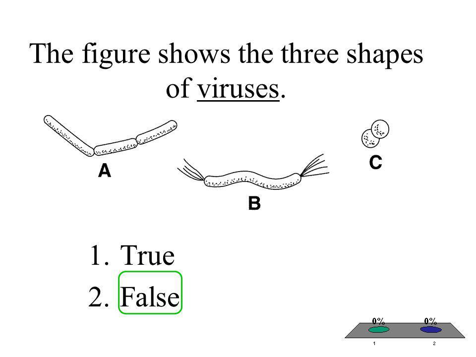 The figure shows the three shapes of viruses. 1.True 2.False