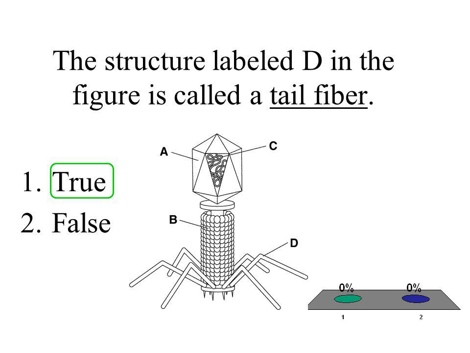 The structure labeled D in the figure is called a tail fiber. 1.True 2.False