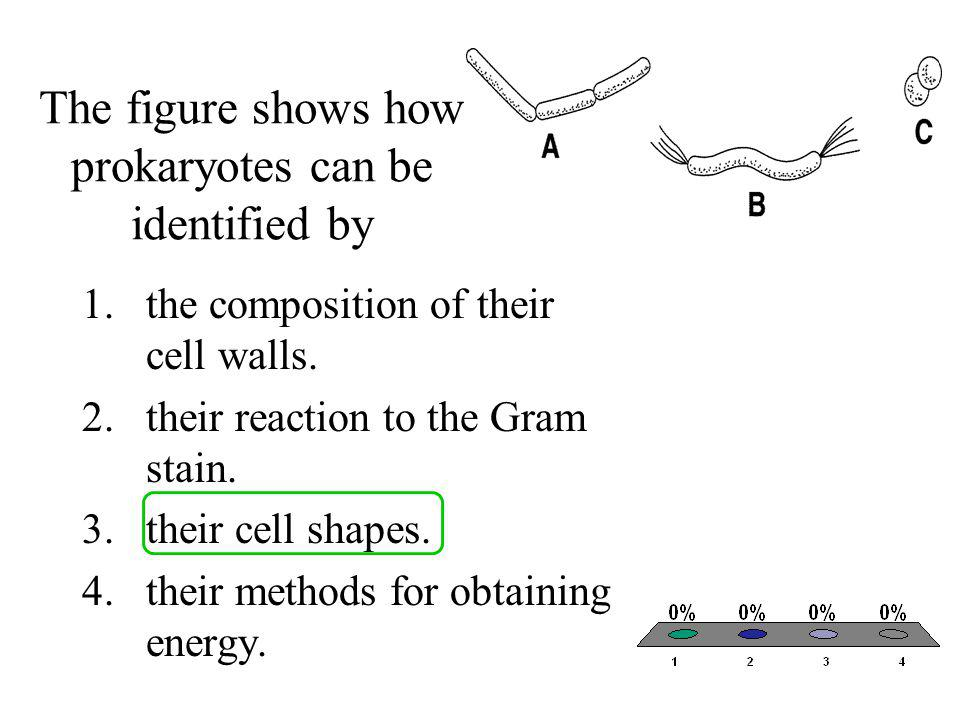 The figure shows how prokaryotes can be identified by 1.the composition of their cell walls. 2.their reaction to the Gram stain. 3.their cell shapes.