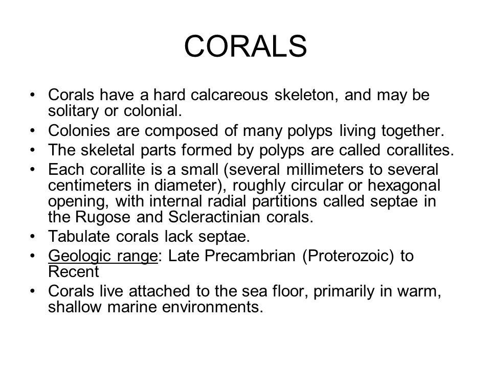CORALS Corals have a hard calcareous skeleton, and may be solitary or colonial. Colonies are composed of many polyps living together. The skeletal par