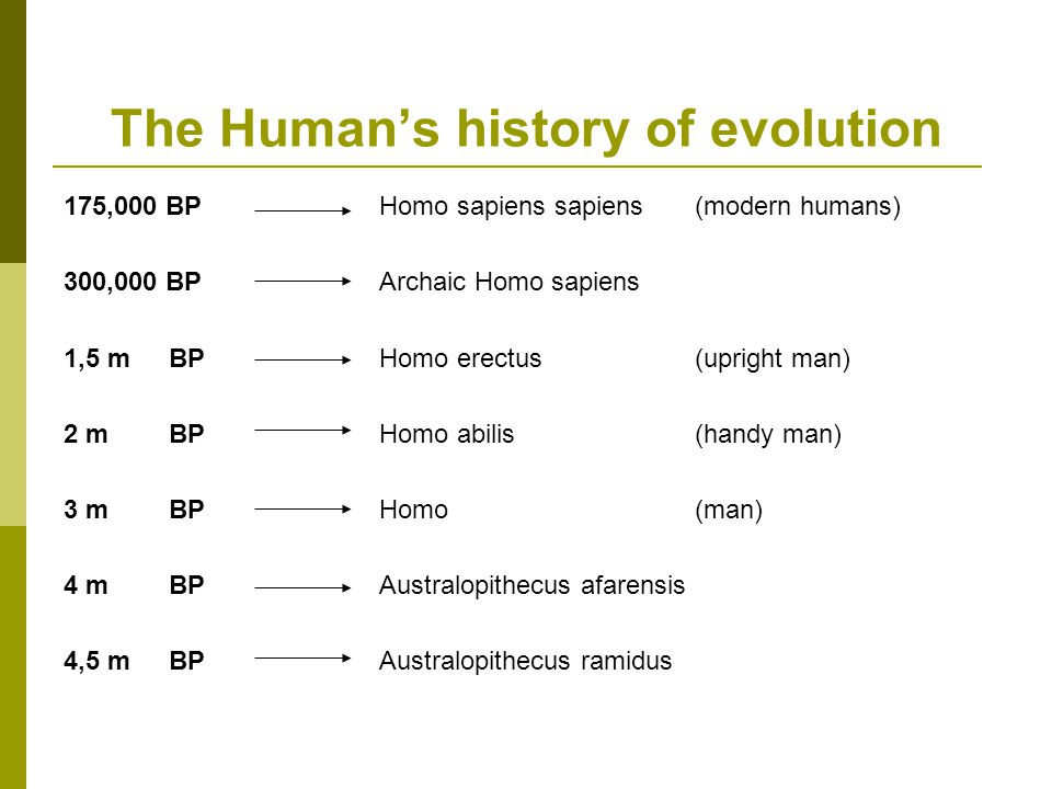The Human's history of evolution 175,000 BP 300,000 BP 1,5 mBP 2 mBP 3 m BP 4 m BP 4,5 m BP Homo sapiens sapiens (modern humans) Archaic Homo sapiens Homo erectus (upright man) Homo abilis(handy man) Homo(man) Australopithecus afarensis Australopithecus ramidus