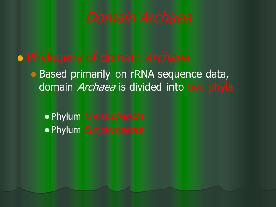 Domain Archaea Phylogeny of domain Archaea Based primarily on rRNA sequence data, domain Archaea is divided into two phyla Phylum Crenarchaeota Phylum