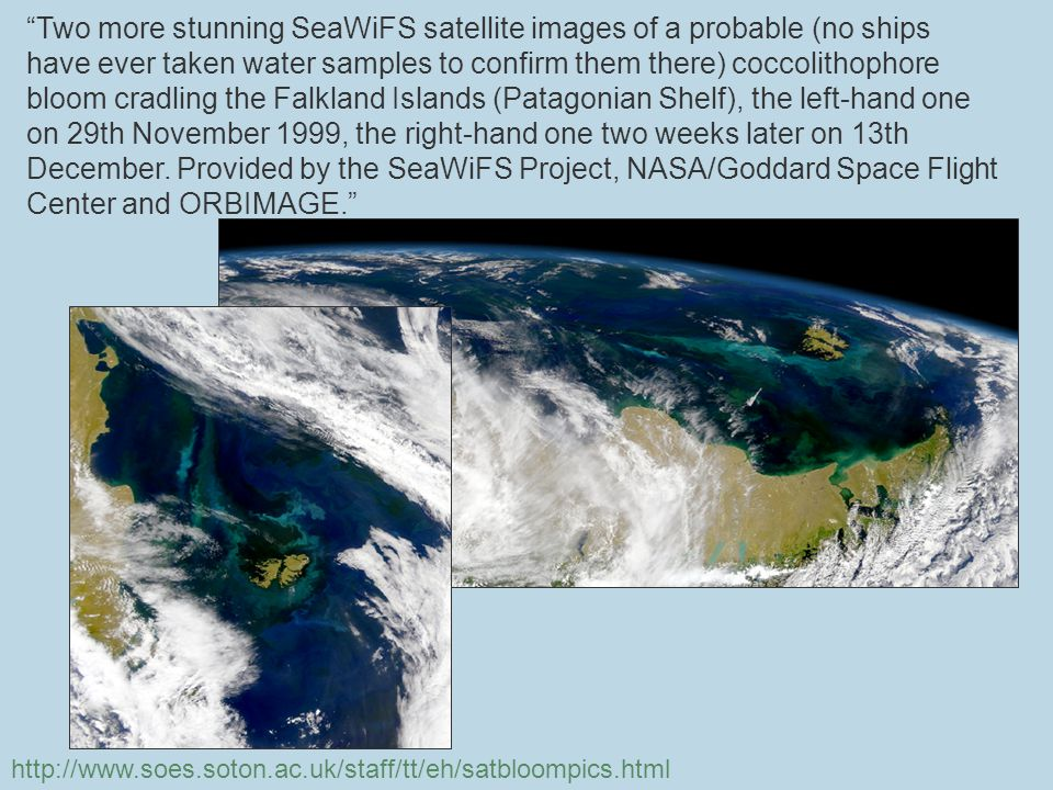 Two more stunning SeaWiFS satellite images of a probable (no ships have ever taken water samples to confirm them there) coccolithophore bloom cradling the Falkland Islands (Patagonian Shelf), the left-hand one on 29th November 1999, the right-hand one two weeks later on 13th December.