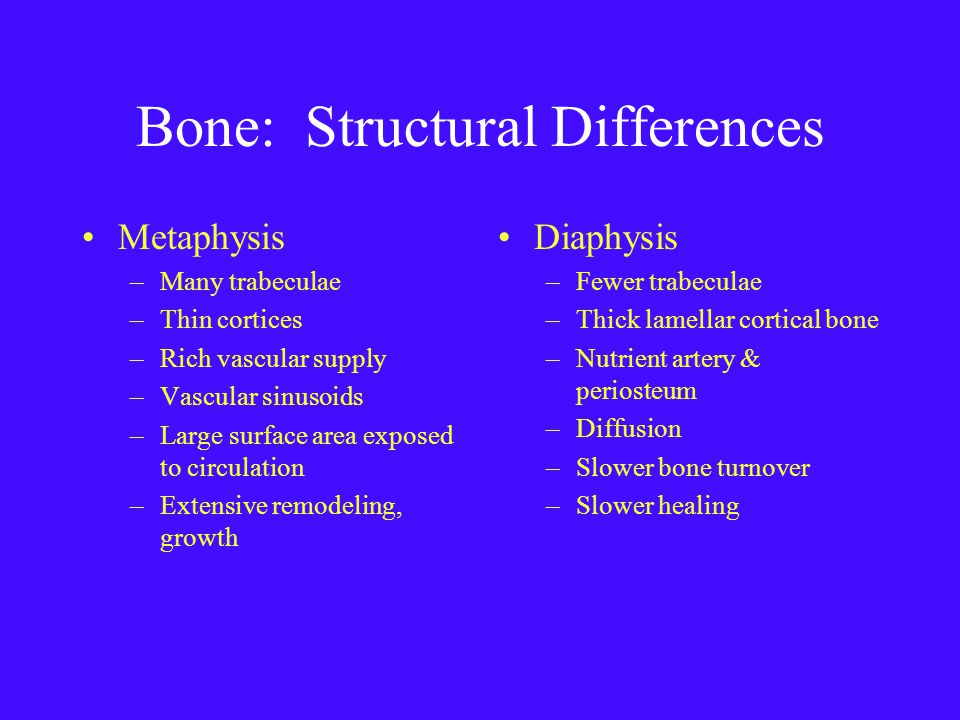 Bone: Structural Differences Metaphysis –Many trabeculae –Thin cortices –Rich vascular supply –Vascular sinusoids –Large surface area exposed to circulation –Extensive remodeling, growth Diaphysis –Fewer trabeculae –Thick lamellar cortical bone –Nutrient artery & periosteum –Diffusion –Slower bone turnover –Slower healing