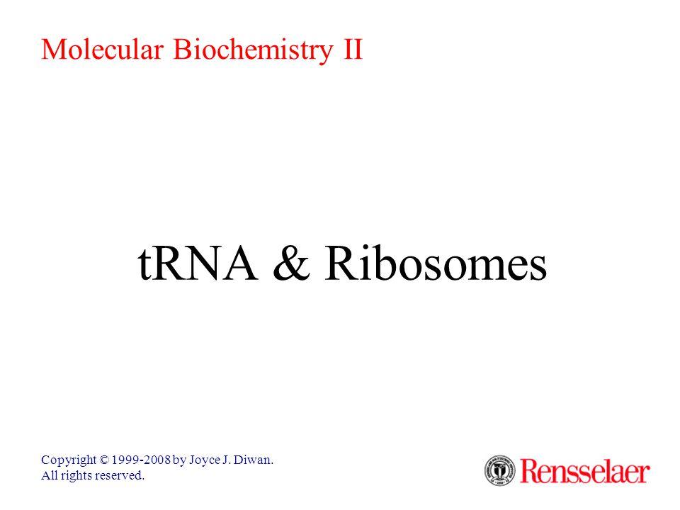 Small Ribosomal Subunit  In the translation complex, mRNA threads through a tunnel in the small ribosomal subunit.