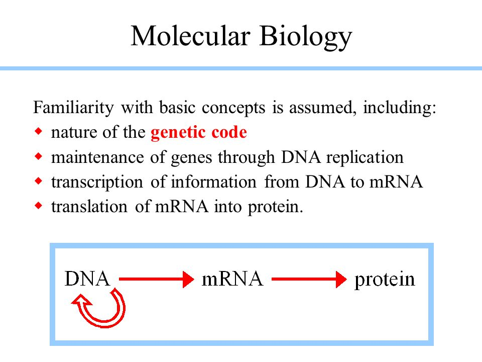 The cloverleaf model of tRNA emphasizes the two major types of secondary structure, stems & loops.