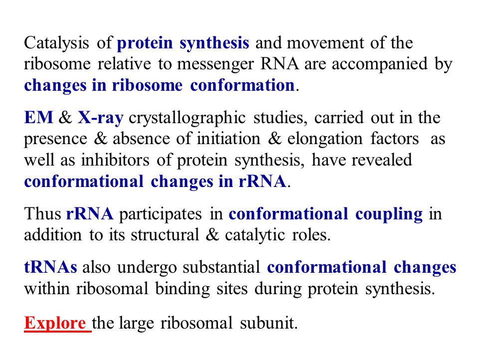 Catalysis of protein synthesis and movement of the ribosome relative to messenger RNA are accompanied by changes in ribosome conformation. EM & X-ray