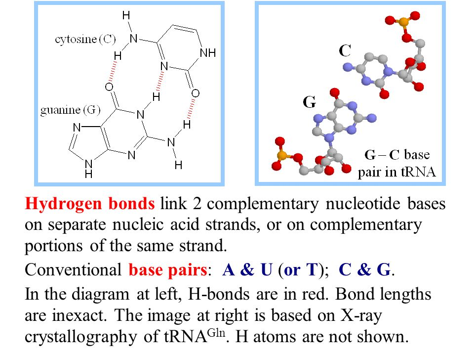Secondary structure Base pairing over extended stretches of complementary base sequences in two nucleic acid strands stabilizes secondary structure, such as the double helix of DNA.