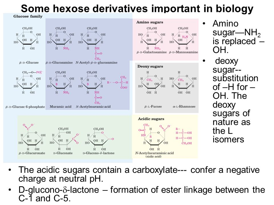 Some hexose derivatives important in biology The acidic sugars contain a carboxylate--- confer a negative charge at neutral pH.