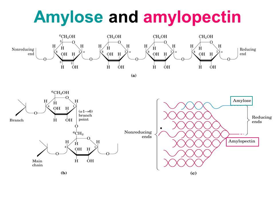 Amylose and amylopectin