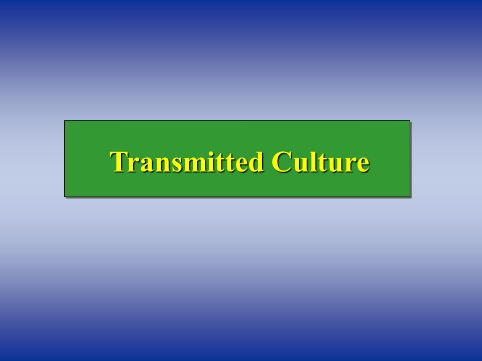 Transmitted Culture