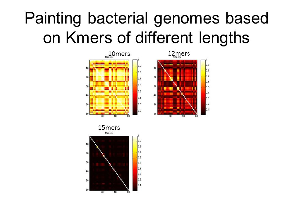 Painting bacterial genomes based on Kmers of different lengths 10mers 12mers 15mers