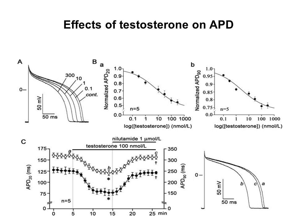 Effects of testosterone on APD