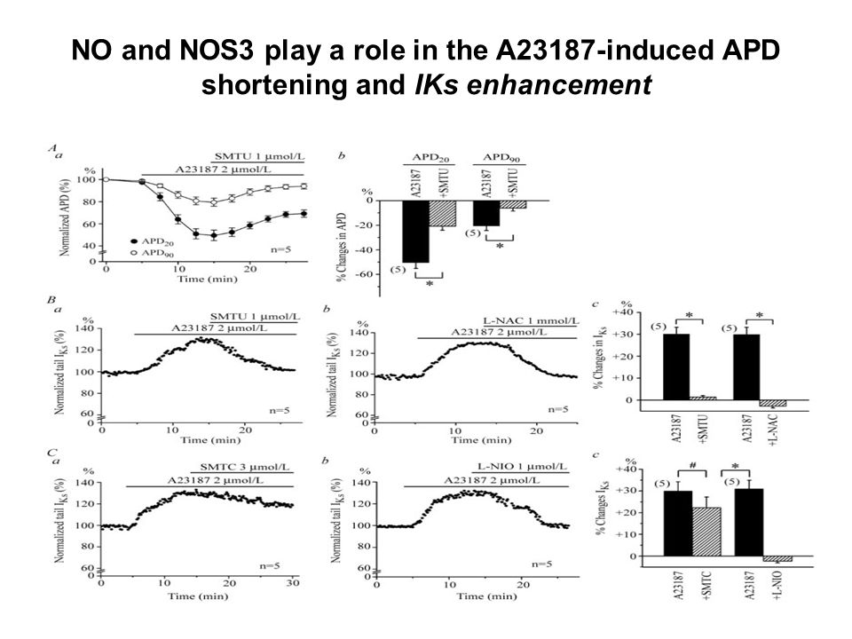 NO and NOS3 play a role in the A23187-induced APD shortening and IKs enhancement