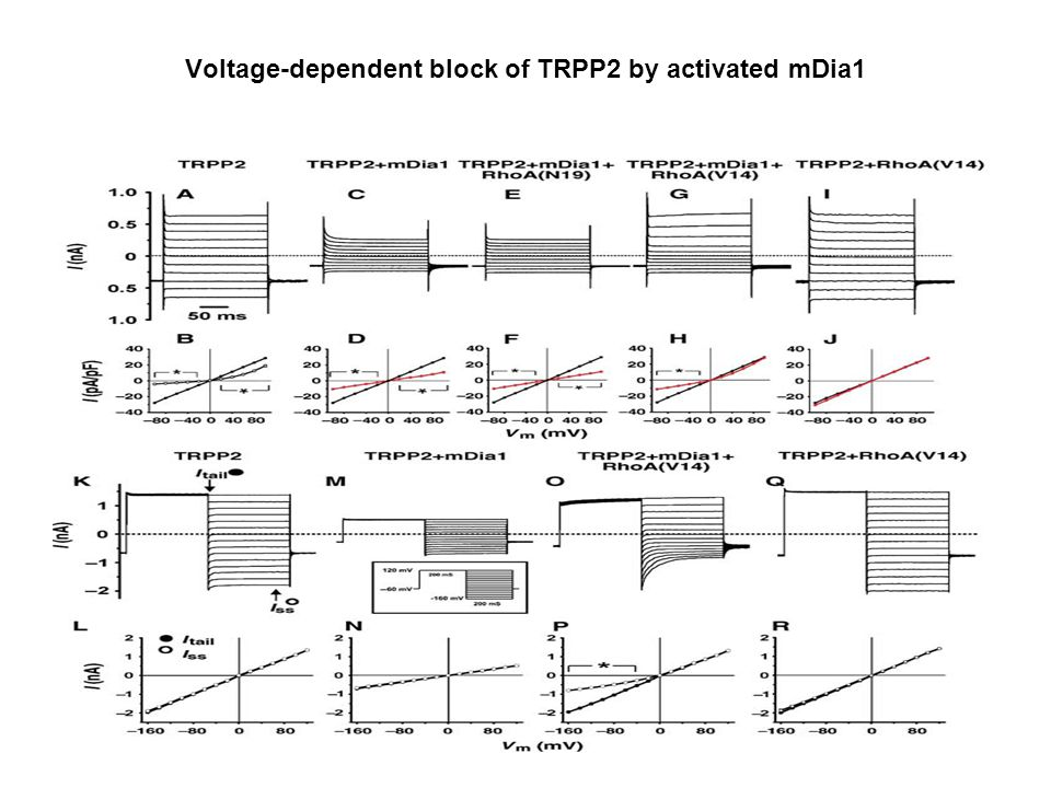Voltage-dependent block of TRPP2 by activated mDia1