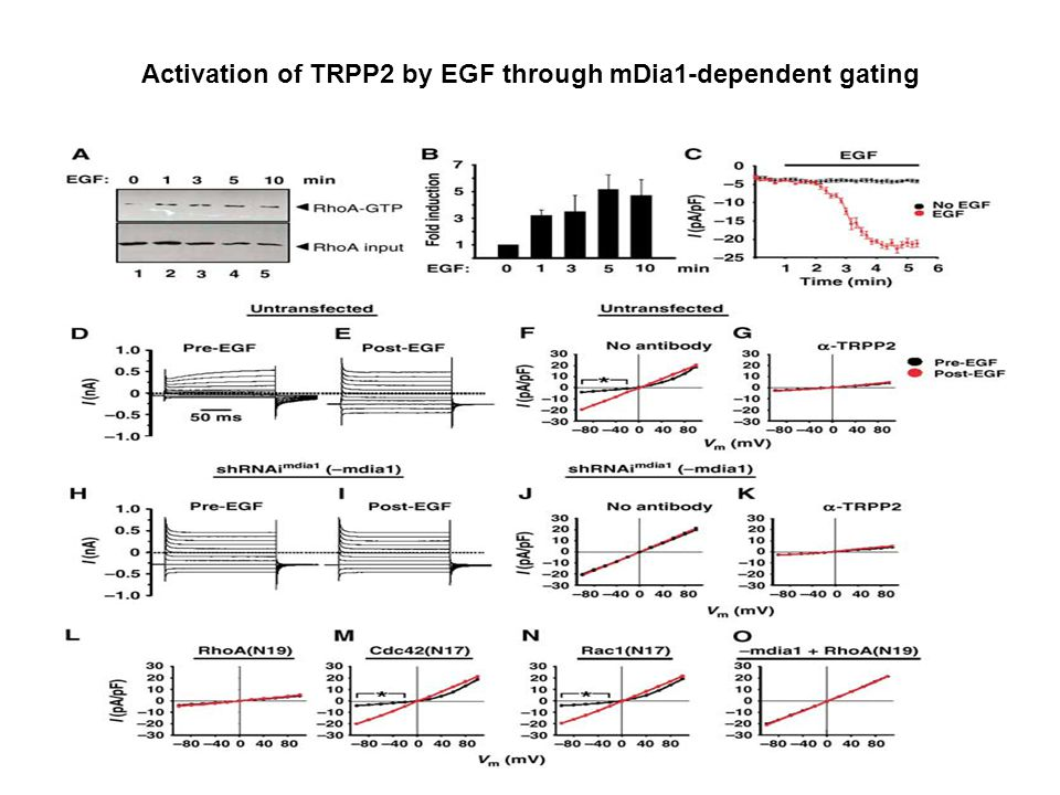 Activation of TRPP2 by EGF through mDia1-dependent gating