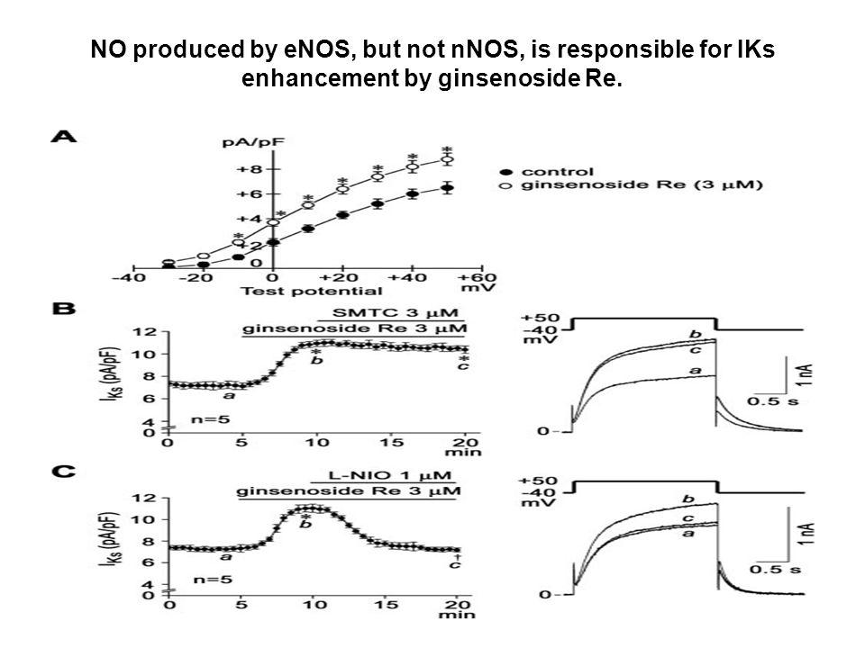 Signaling cascade of IKs enhancement by ginsenoside Re.