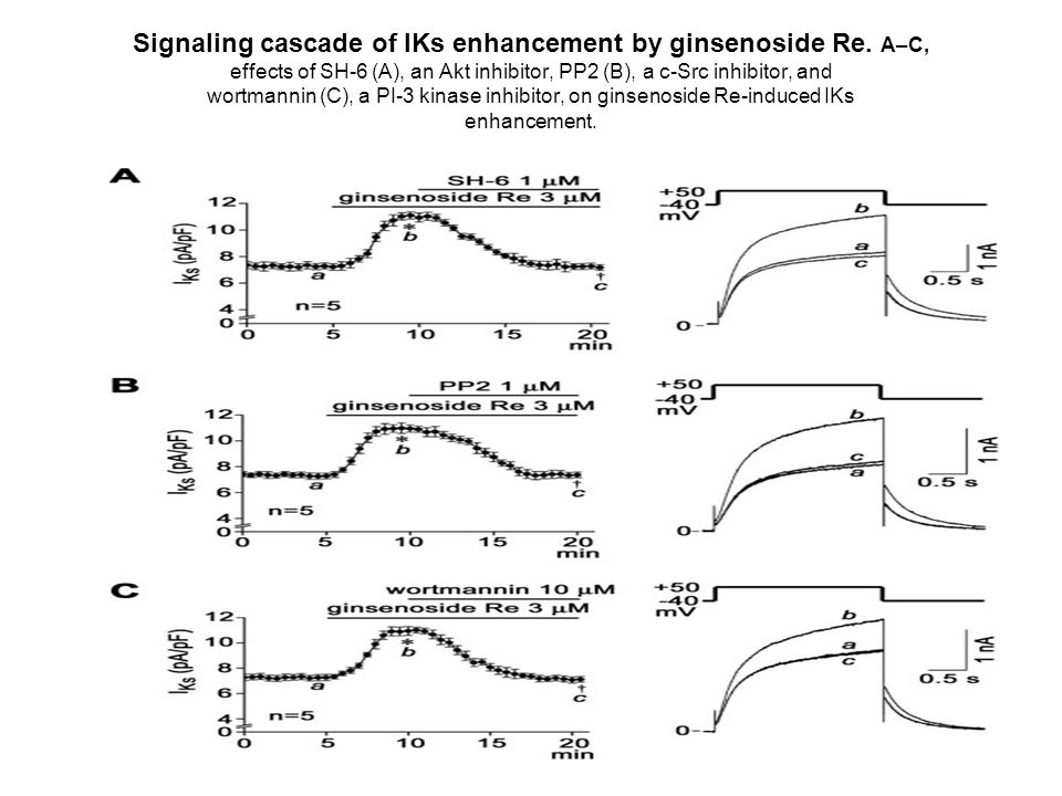 Effects of preincubation with various blockers on ginsenoside Re (3 M)-induced IKs enhancement