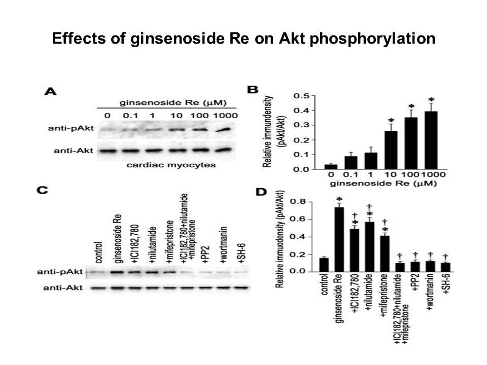Effects of ginsenoside Re on Akt phosphorylation