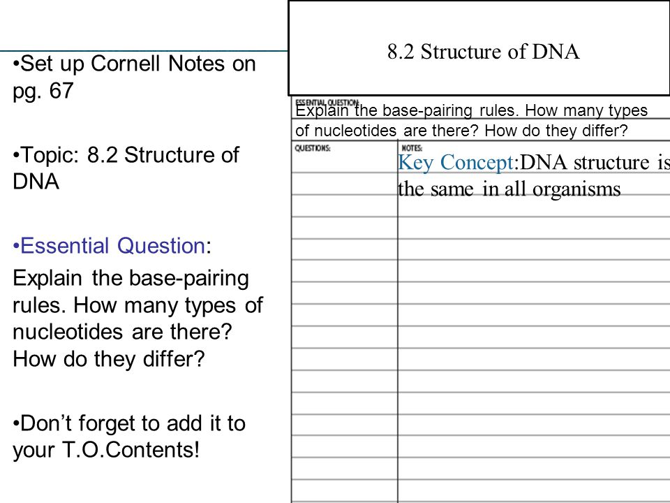 8.2 Structure of DNA Set up Cornell Notes on pg. 67 Topic: 8.2 Structure of DNA Essential Question: Explain the base-pairing rules. How many types of