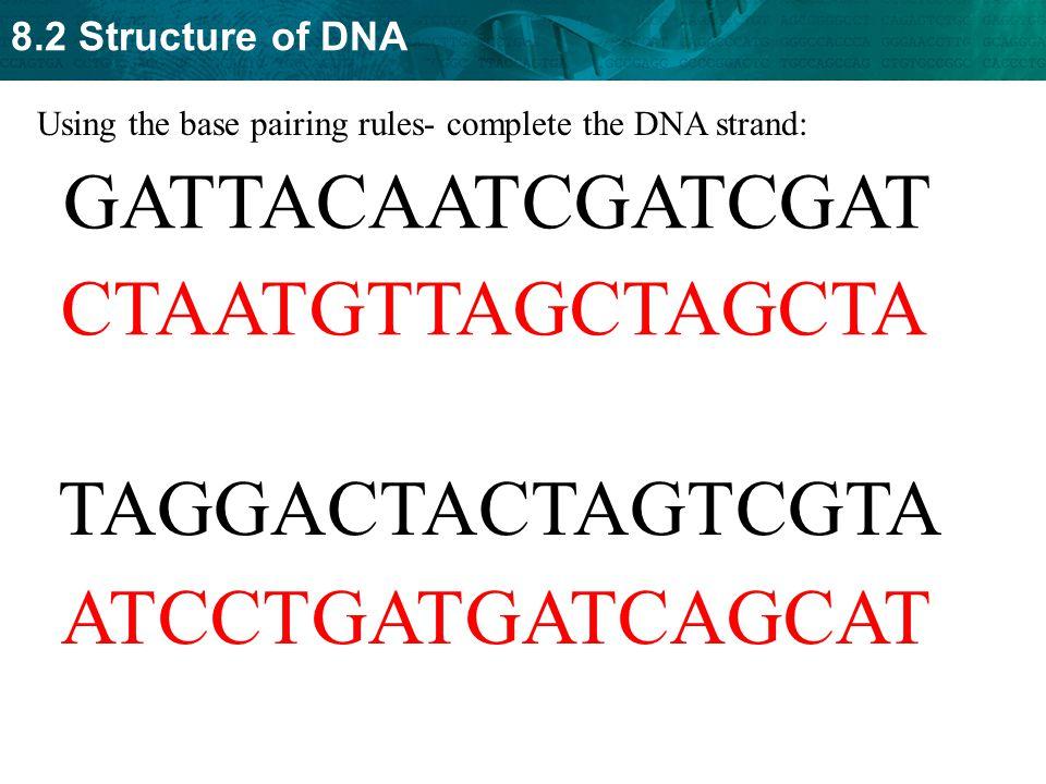 GATTACAATCGATCGAT CTAATGTTAGCTAGCTA TAGGACTACTAGTCGTA ATCCTGATGATCAGCAT Using the base pairing rules- complete the DNA strand: