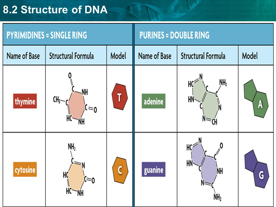 8.2 Structure of DNA