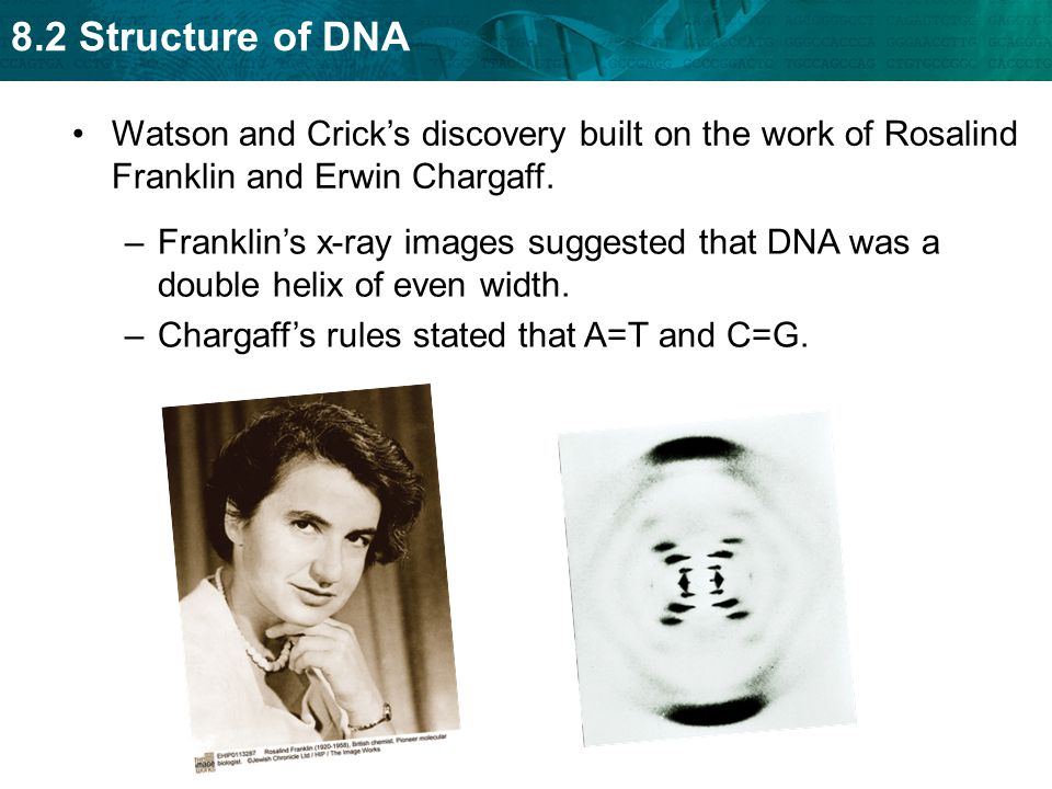 8.2 Structure of DNA Watson and Crick's discovery built on the work of Rosalind Franklin and Erwin Chargaff. –Franklin's x-ray images suggested that D