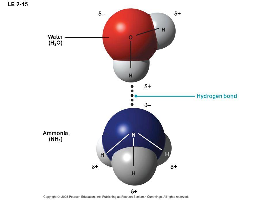 LE 2-15 –– Water (H 2 O) Ammonia (NH 3 ) Hydrogen bond ++ ++ –– ++ ++ ++