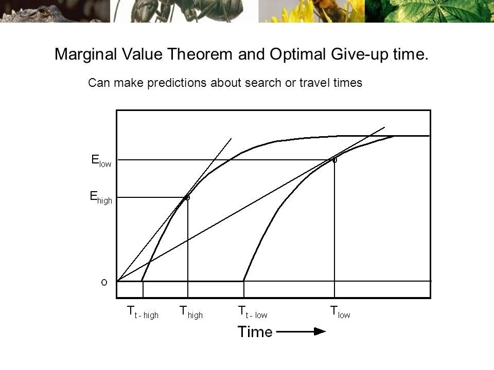 Marginal Value Theorem and Optimal Give-up time. Can make predictions about search or travel times