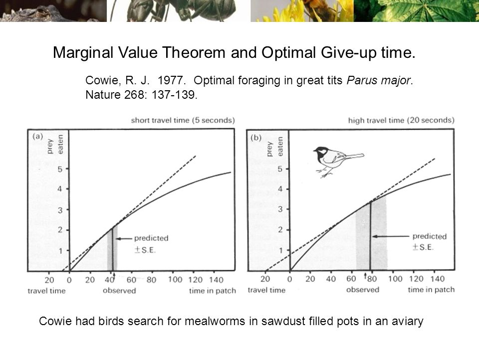 Marginal Value Theorem and Optimal Give-up time. Cowie, R.
