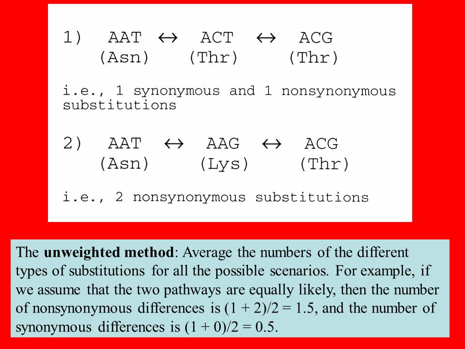 21 The unweighted method: Average the numbers of the different types of substitutions for all the possible scenarios.