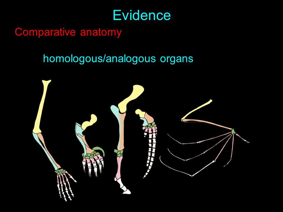 Evidence Comparative anatomy homologous/analogous organs