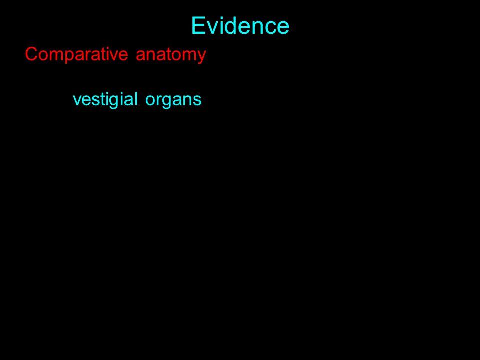 Evidence Comparative anatomy vestigial organs