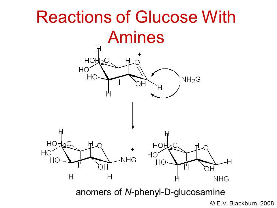 © E.V. Blackburn, 2008 Reactions of Glucose With Amines anomers of N-phenyl-D-glucosamine