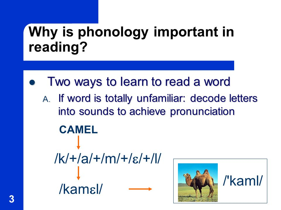 3 Why is phonology important in reading.