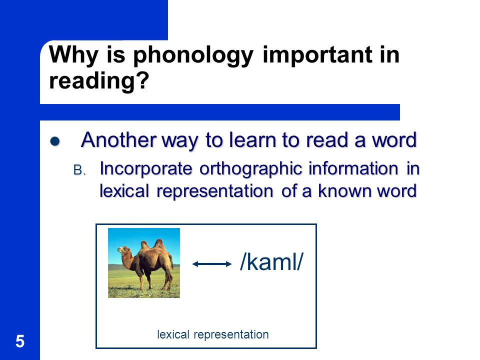 5 Why is phonology important in reading.
