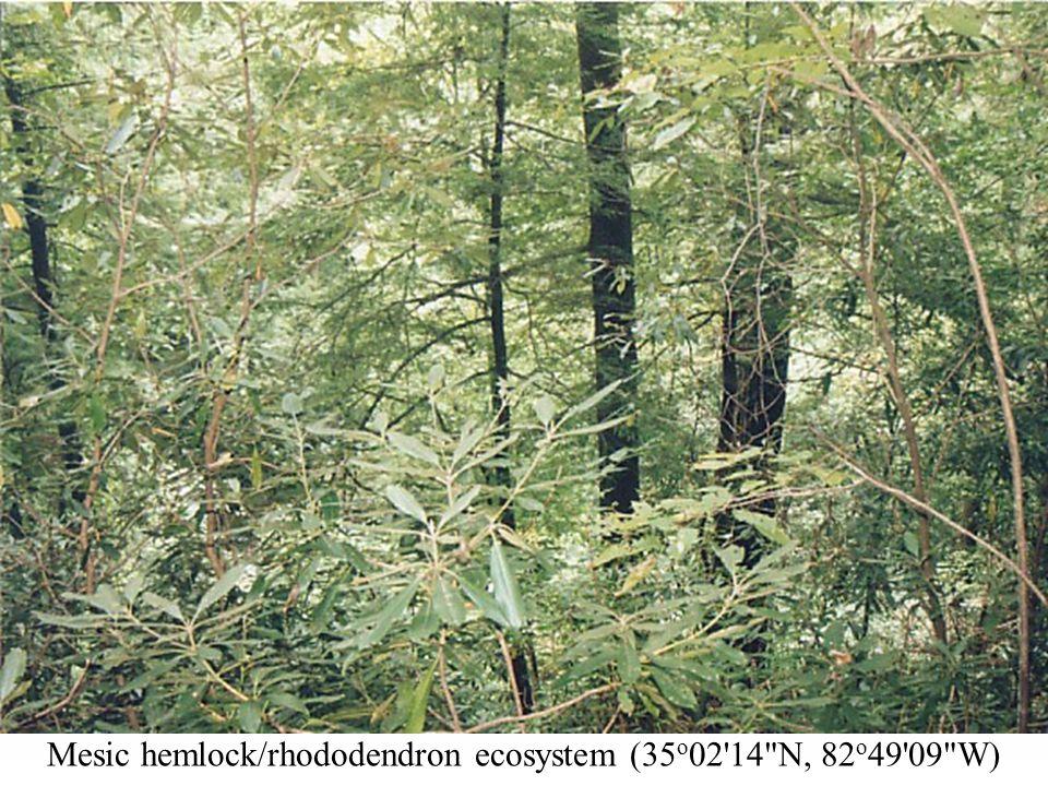 Mesic hemlock/rhododendron ecosystem (35 o 02  N, 82 o 49 09 W)