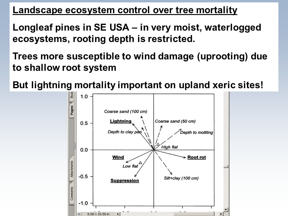 Landscape ecosystem control over tree mortality Longleaf pines in SE USA – in very moist, waterlogged ecosystems, rooting depth is restricted. Trees m