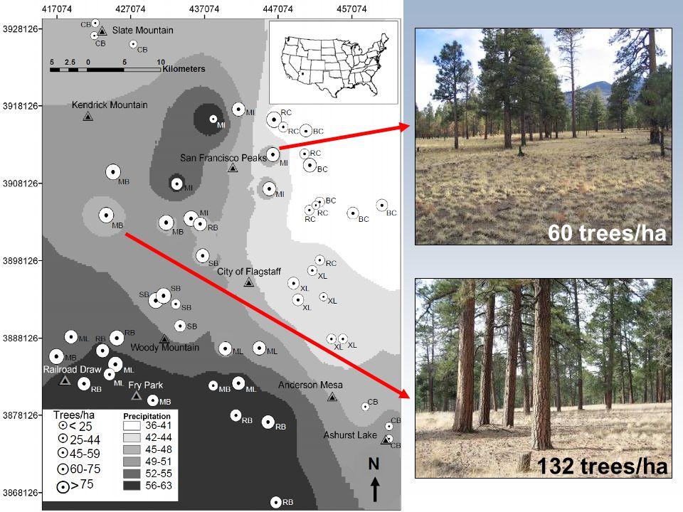 60 trees/ha 132 trees/ha
